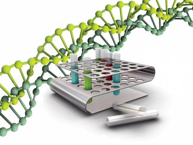 полимеразная цепная реакция (ПЦР) для диагностики туберкулеза