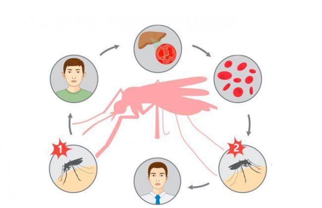 инфицирование малярией