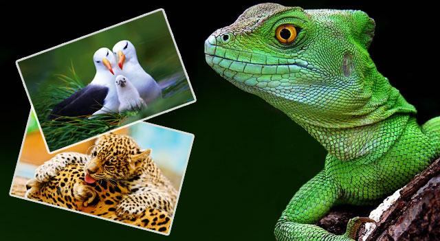 Рептилия, птицы и млекопитающие