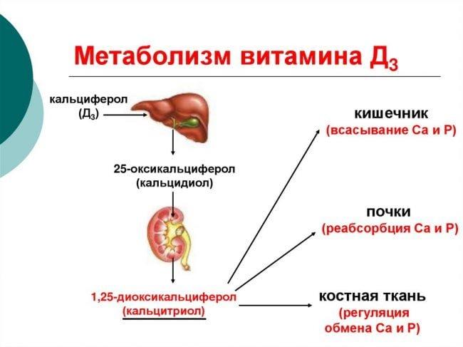 метаболизм витамина Д3