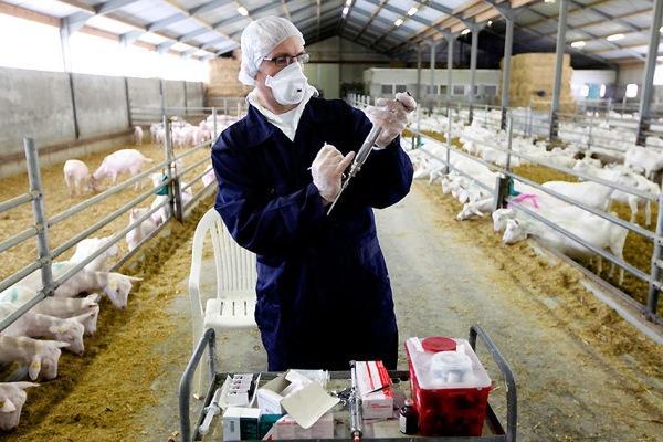 профилактические меры при инфекции