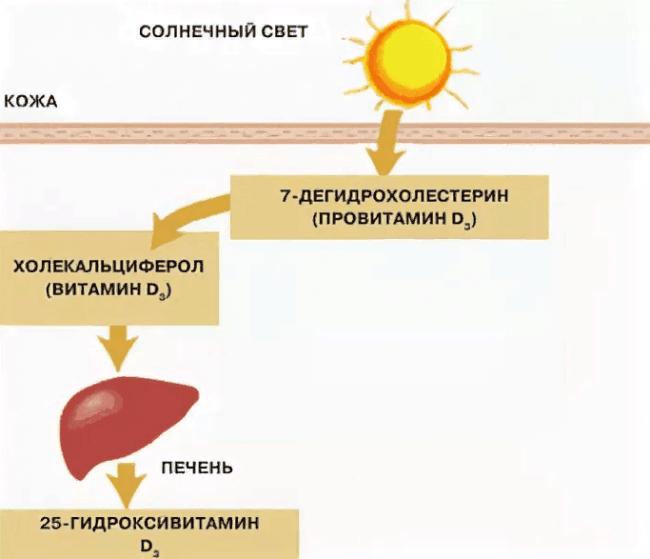 солнечный свет и выработка д3