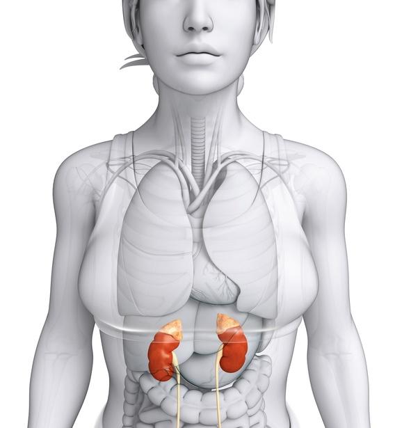 какие гормоны вырабатываются надпочечниками у женщин