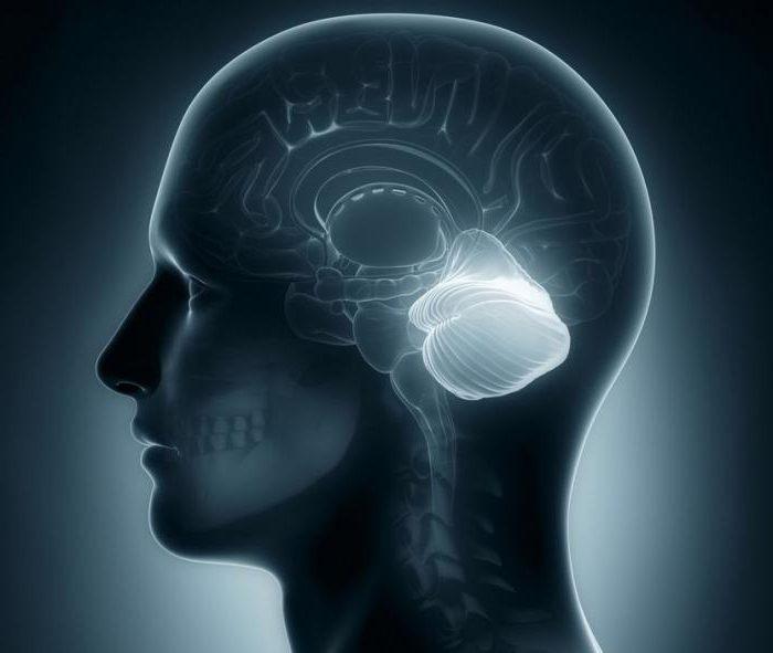мозжечок лечение