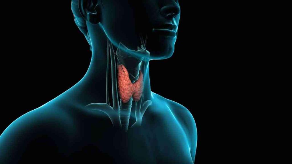 щитовидная железа какие гормоны
