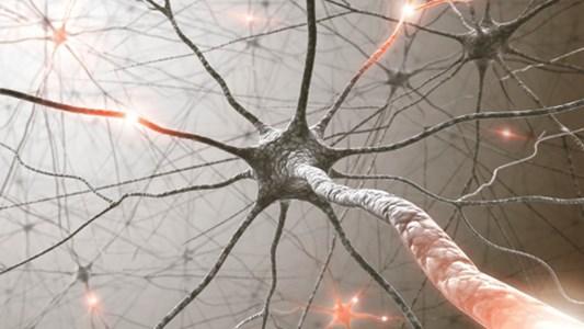 фото нейрона