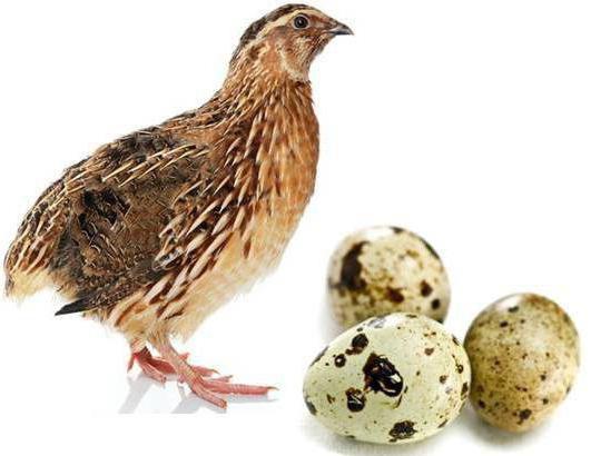 можно яйца при гастрите