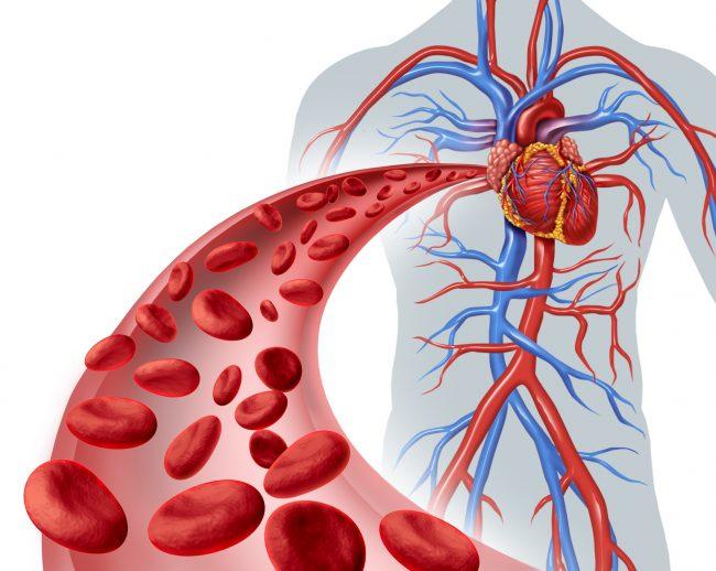 усиление кровообращения во время