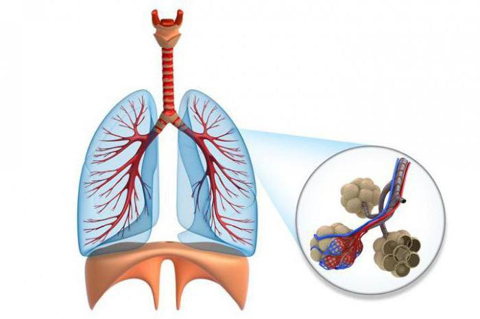 фиброзирующие альвеолиты