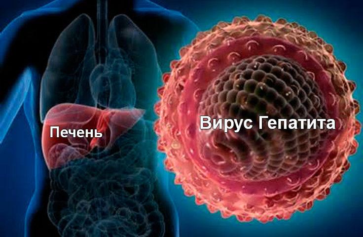 Это вирус гепатита