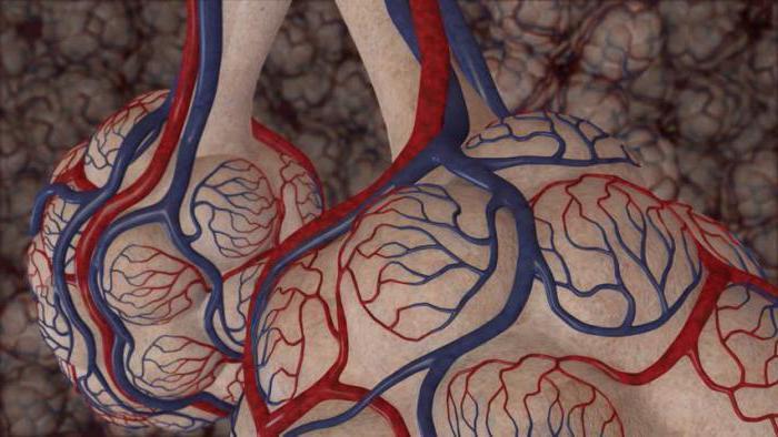 состав альвеолярного воздуха