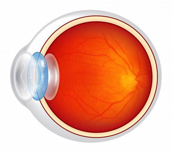 Схематическое изображение глазного яблока
