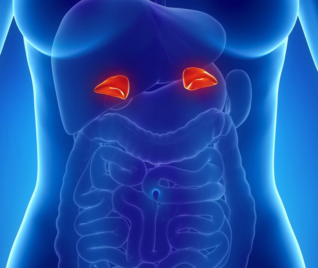 какой гормон секретируется надпочечниками