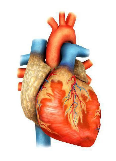 гемодинамические варианты артериальной гипертензии