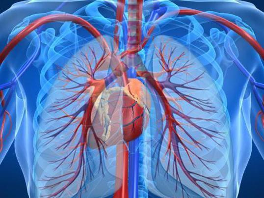 первичная артериальная гипертензия у подростков