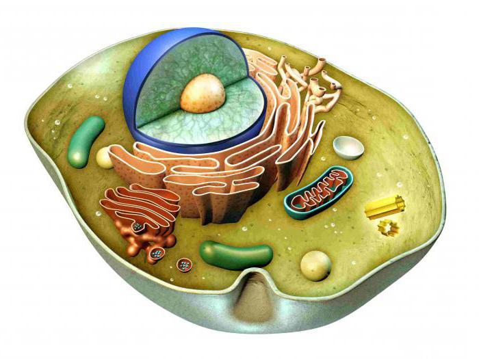 коррекция метаболического ацидоза