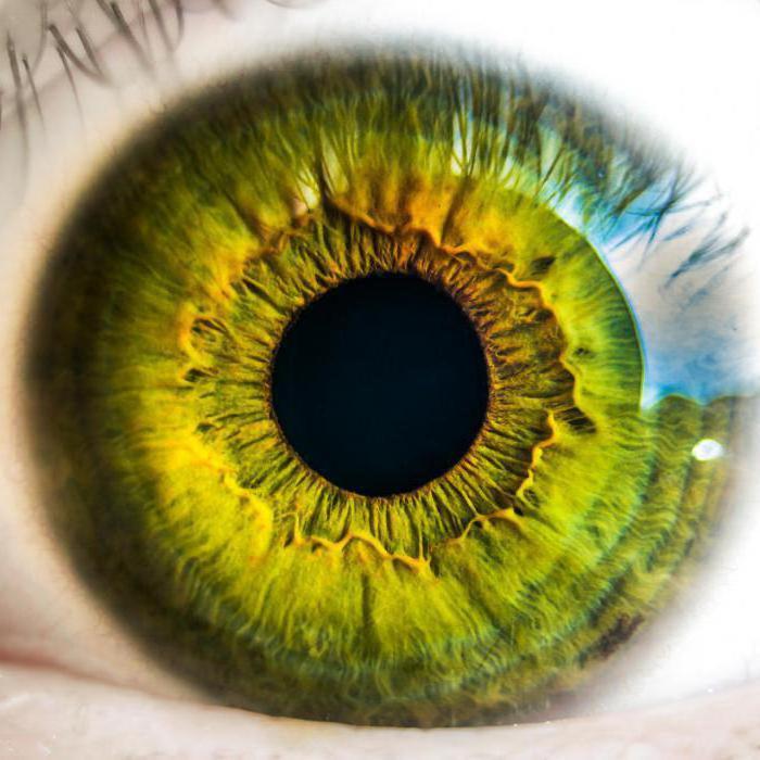 глазные сосуды