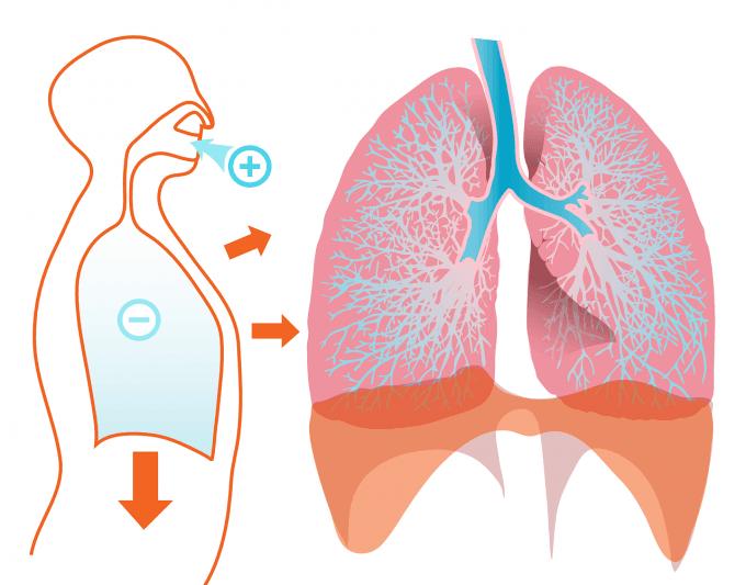 микобактерии при туберкулезе