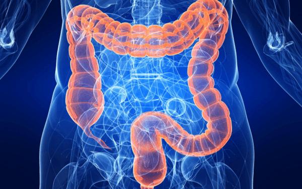 как развивается шигеллез в организме человека