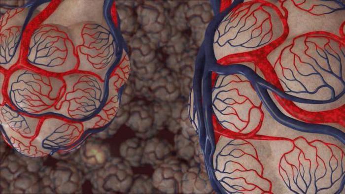 альвеолярное строение легких